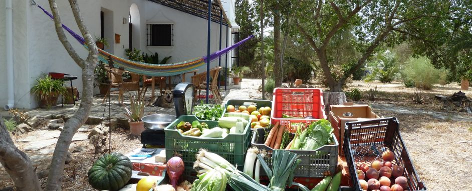 Frutas y Verduras Ecologicas - Organic Fruit and Vegetables