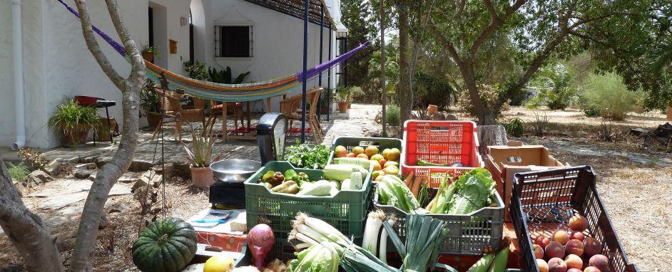 Mercado Verduras cada Miercoles